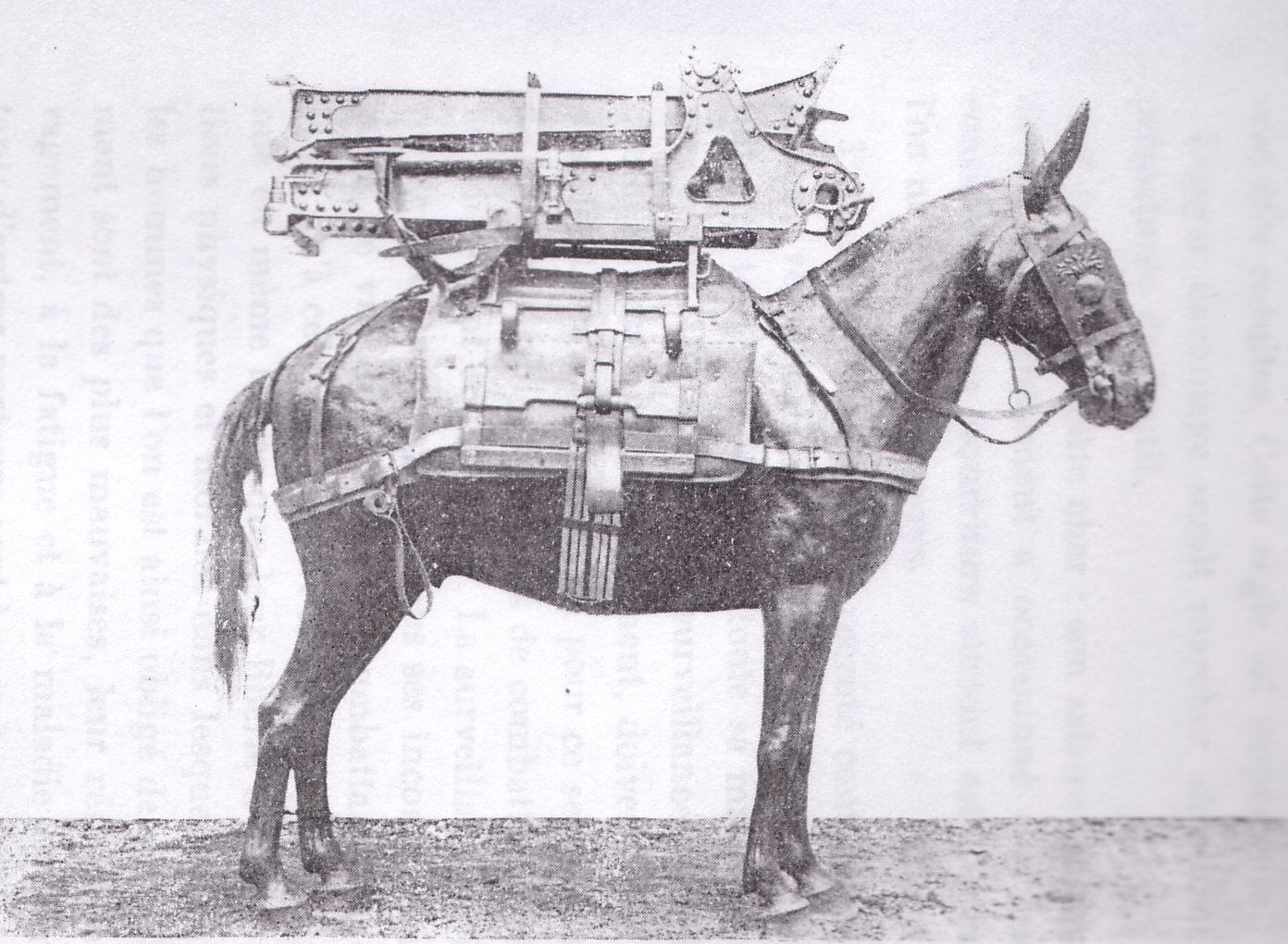 70mm carriage mounted on a pack mule