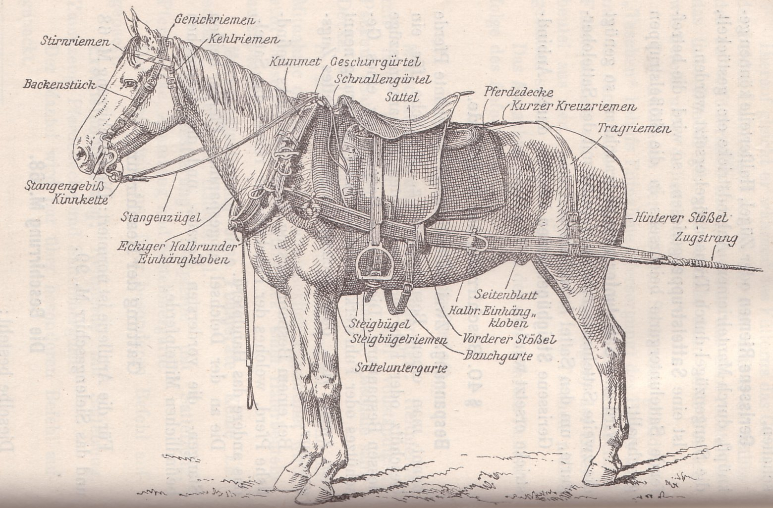 Austro-Hungarian Driver Horse Rig